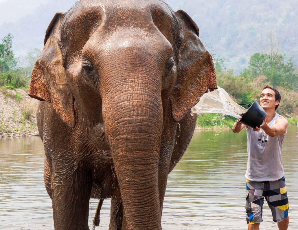 پارک فیل ها در تایلند