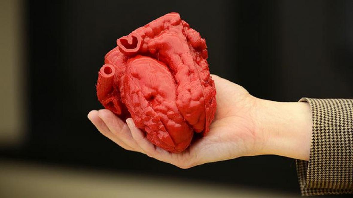 محققین توانستند قلب انسان را در خارج از بدن رشد بدهند
