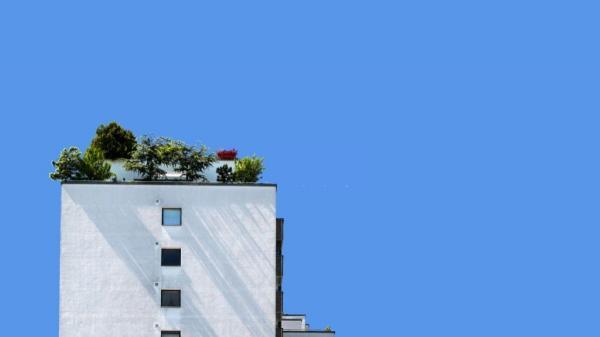 گیاهان مناسب برای روف گاردن : تجربه بهشت در بام سبز