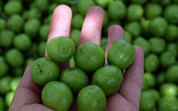 گوجه سبز میوه لوکس است ، هر کیلو گوجه سبز 125 هزار تومان