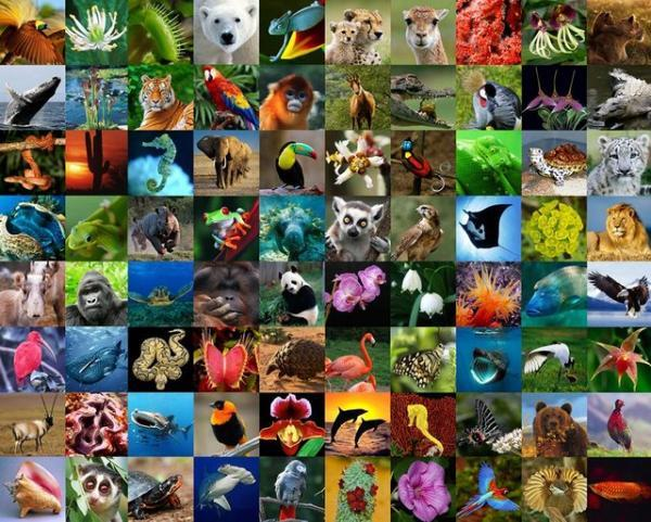 هشدارهای صندوق جهانی حیات وحش درباره شرایط تنوع زیستی در کره زمین