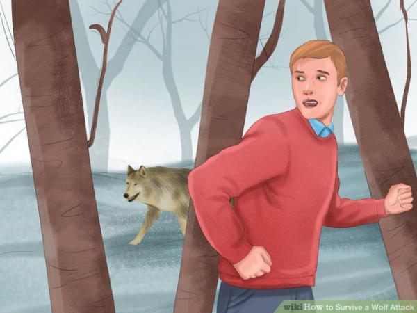 راه های نجات از گرگ در طبیعت